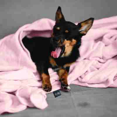 Smooth minky weighted blankets for dogs