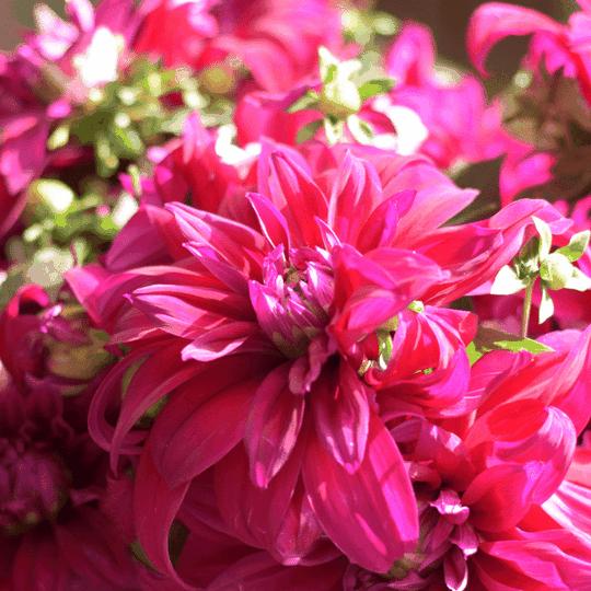 Probiotics for flowers enzymes proteins hormones teraganix
