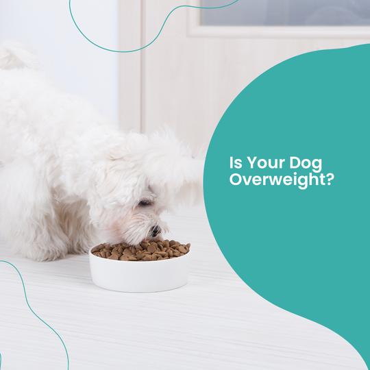 dog eating dog food from dog bowl