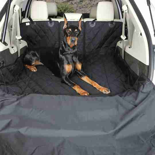 Dog lying in back of car.