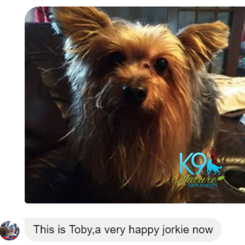toby-yorkie-happy-all-clear-customer