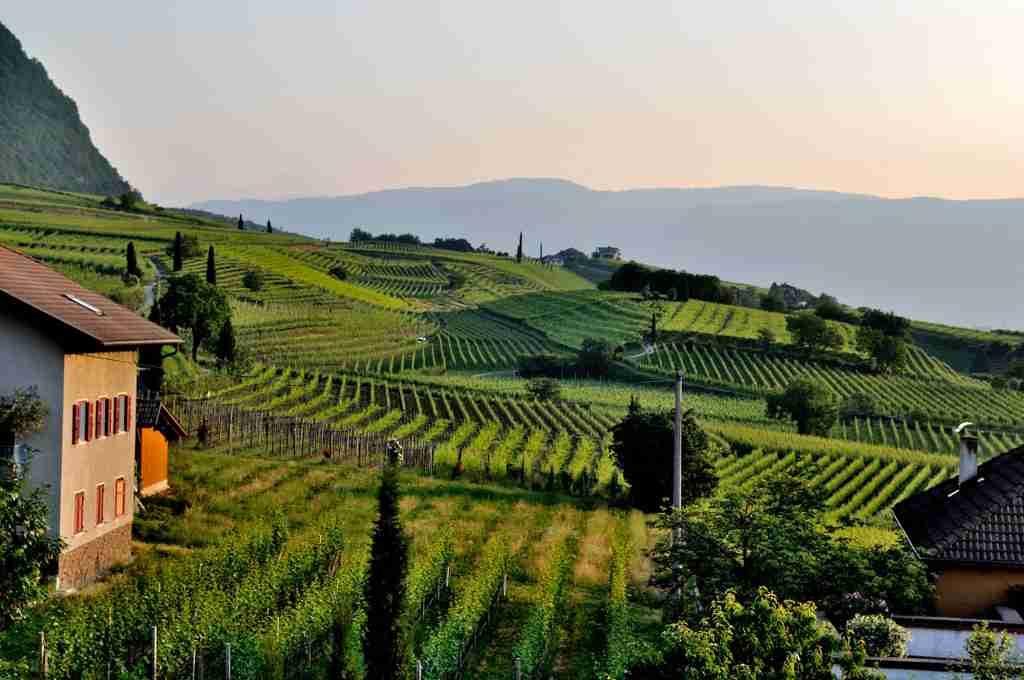 Big Hammer Wines Vineyard