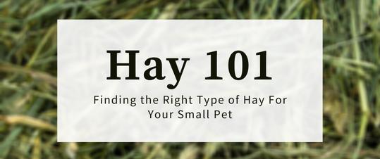 Hay 101