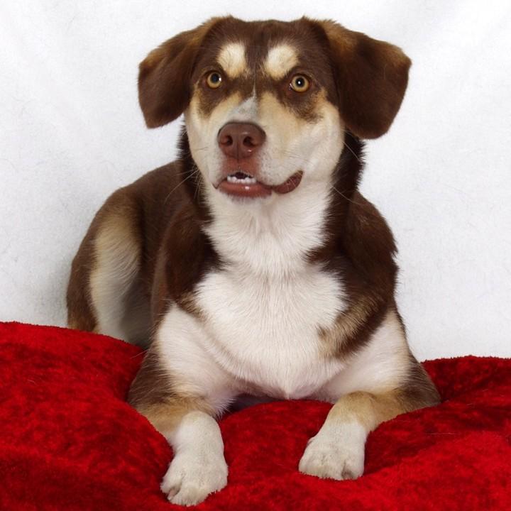Max, John's Dog