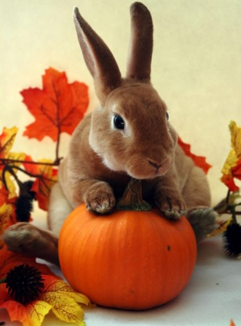 rabbit holding a pumpkin