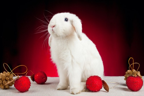 rabbit with Christmas ornaments