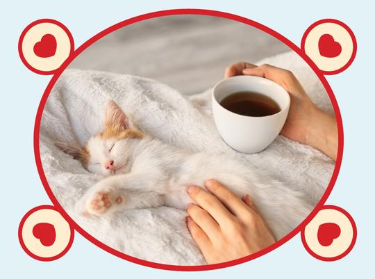 Rooibos Rocks tea with cat