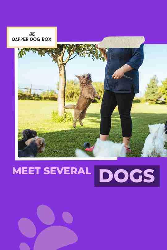 Meet more than one dog