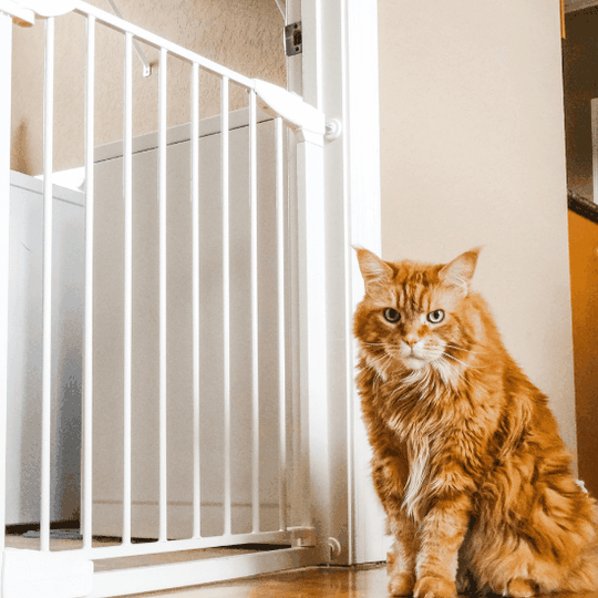 baby gate alternative to baby proof litter box - article image
