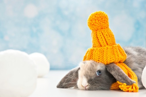 rabbit staying warm in winter