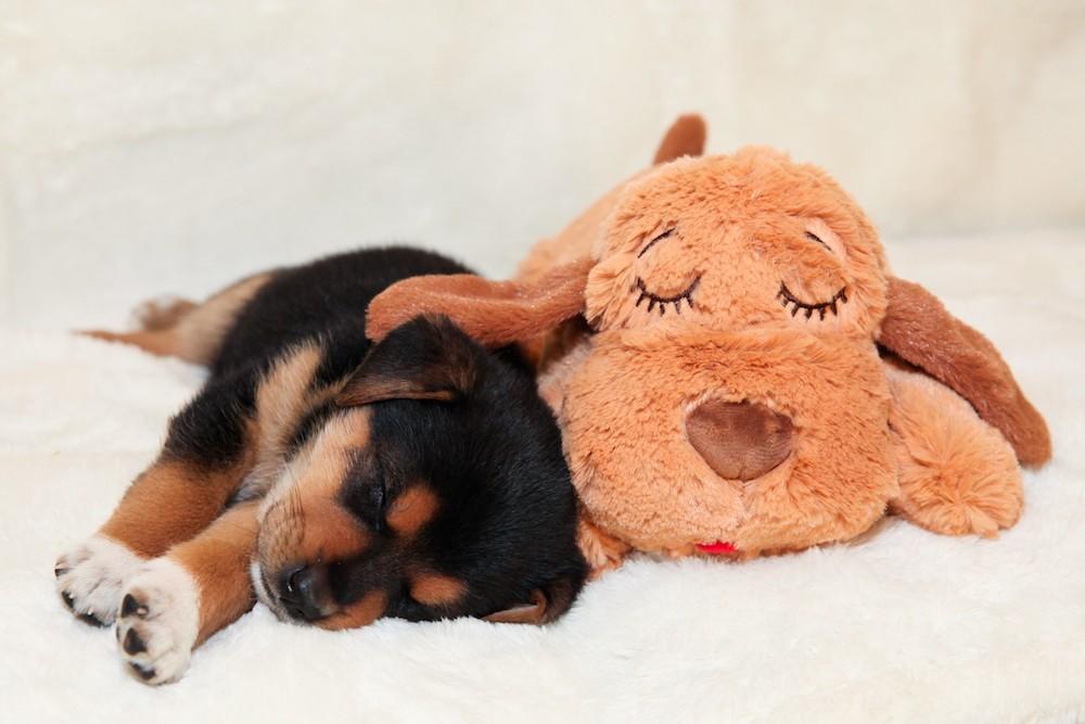 Snuggle-puppy-cuddle