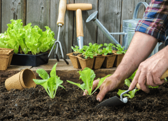 Changing your soil_healthy soil