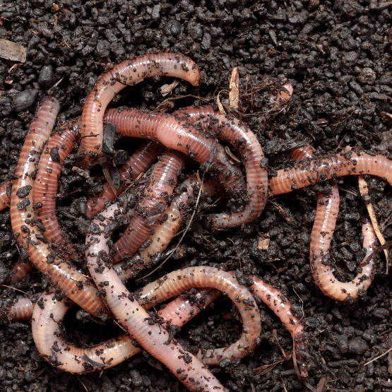 composting invites earthworms to your soil