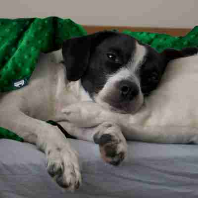 Sensory minky weighted blankets for dogs