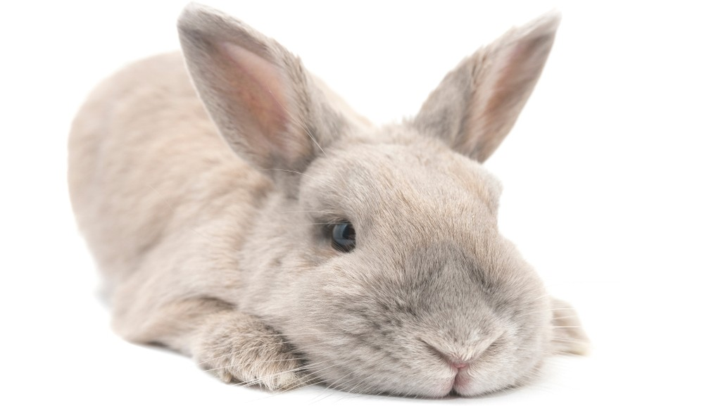 rabbit with a health issue