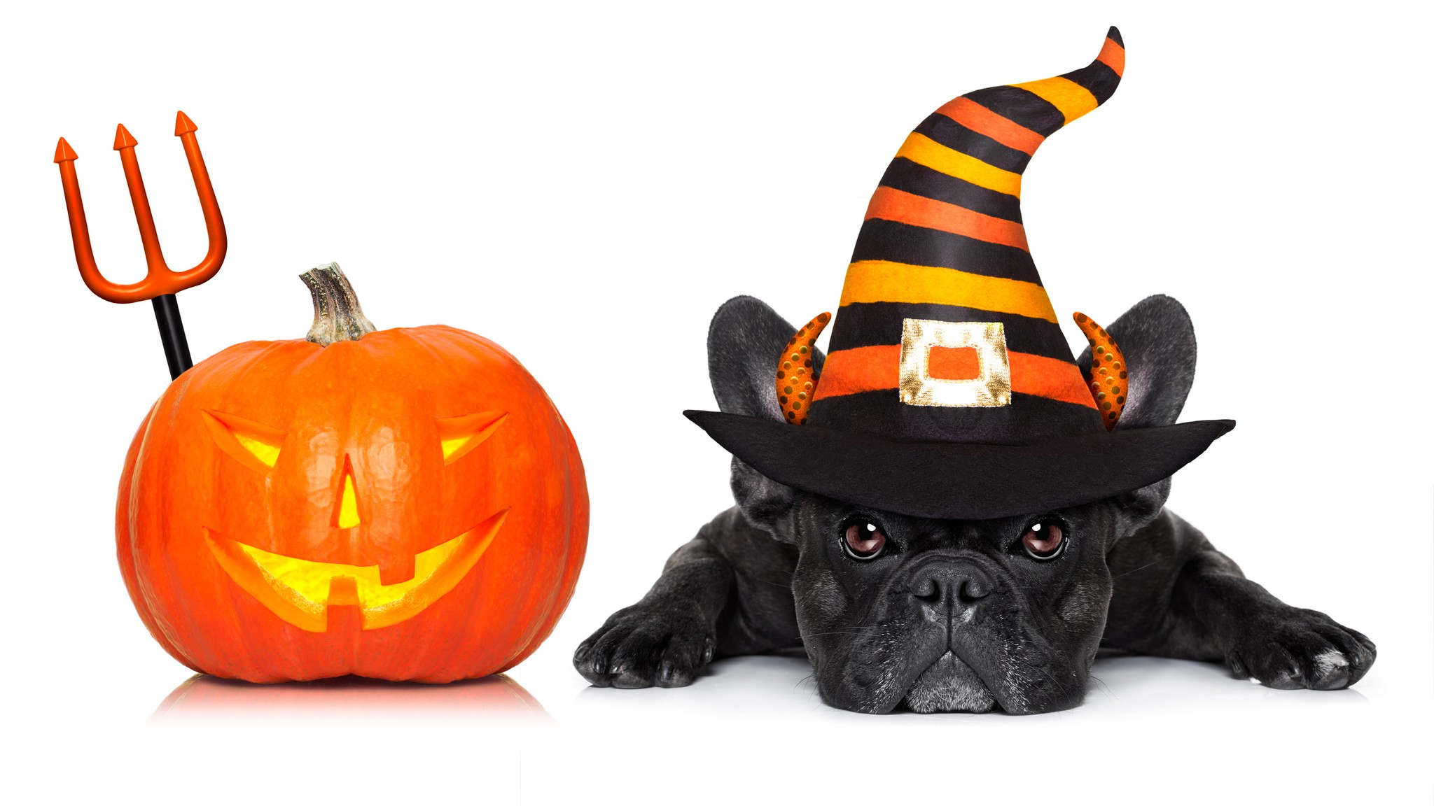 8 Important Halloween Safety Tips for Dogs