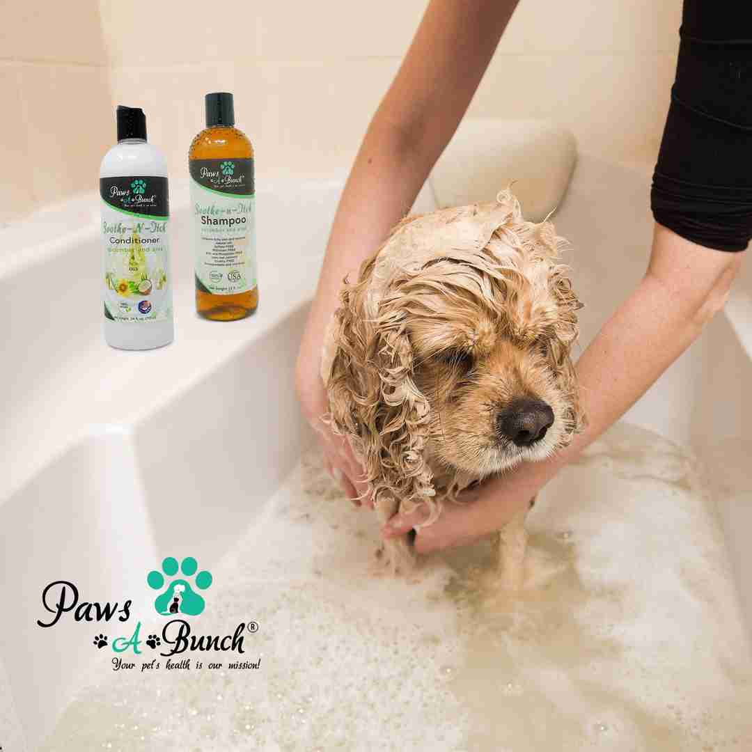 Dog being bathed with Soothe-n-Itch Conditioner by Paws-a-Bunch. Conditioner for Dogs and Cats Anti-Itch