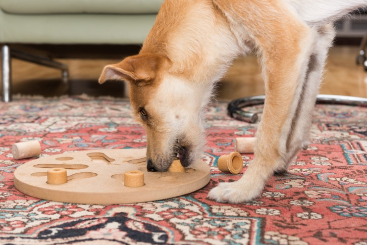 How Puzzle Toys Can Change Your Dog's Life