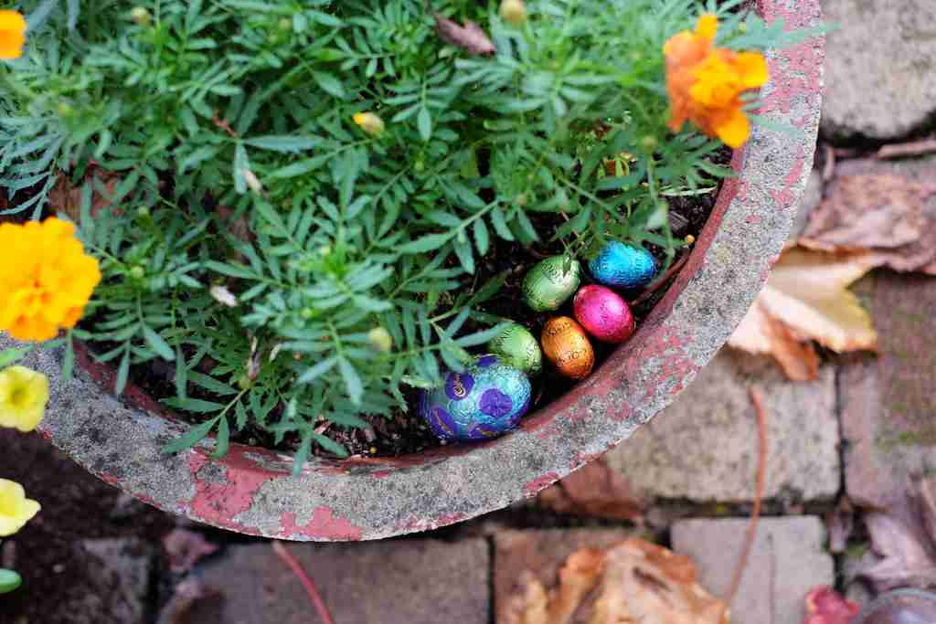 Easter Egg Hunt in the garden - Easter Eggs in a concrete pot with marigolds