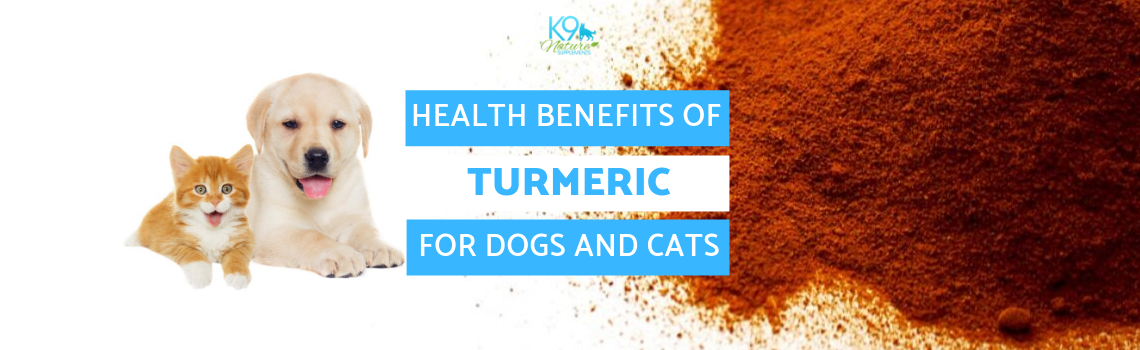 Health Benefits of Turmeric for Dogs and Cats