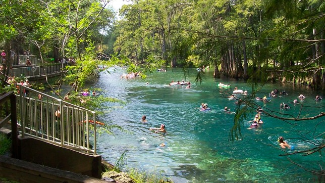 Suwannee River and Manatee Springs State Park