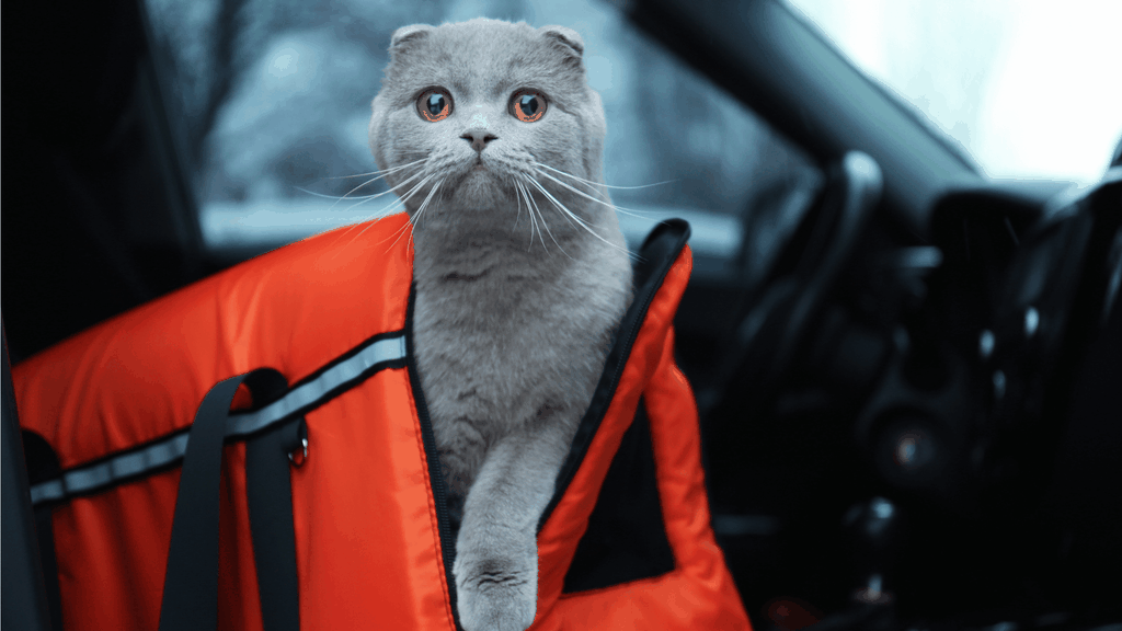 Traveling with a cat in a car - Cover Image