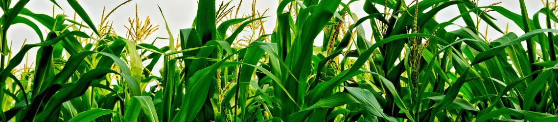 Teraganix missouri agtech research center corn case study ag1000