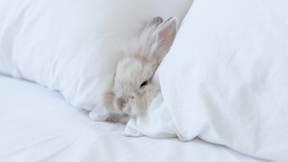 rabbit between two pillows on a bed