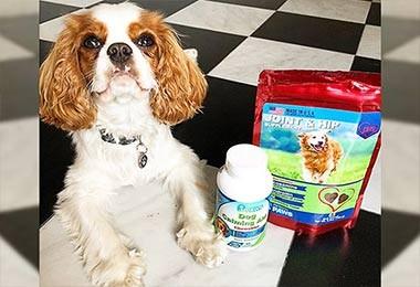 Kirby Doodle - Calm Dog Soft Chew Treats