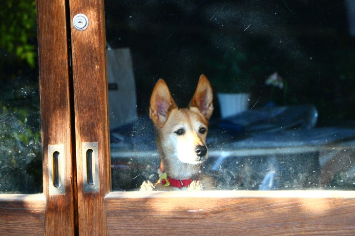 Separation Anxiety in Dogs and How to Manage It