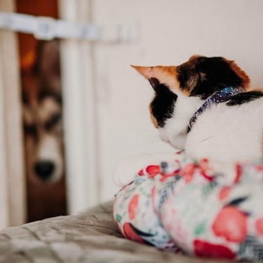 The Door Buddy - Blog - Hacks for Cat Owners