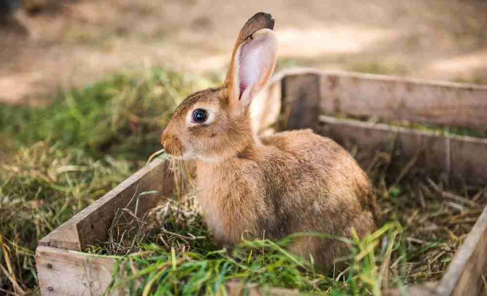 rabbit in hay box
