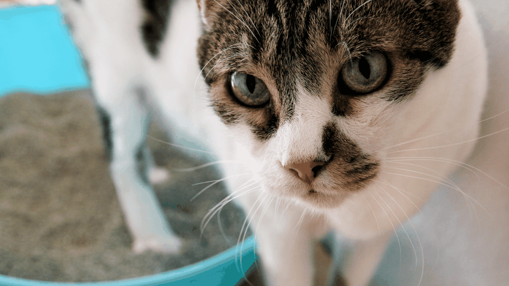 Cat not using litter box - Blog image