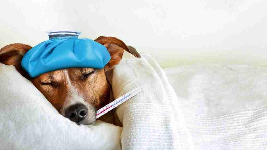 Top Pet Diseases - Blog Cover
