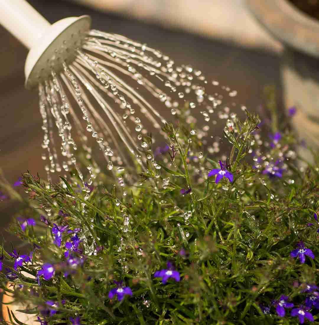 wellness practices watering plants