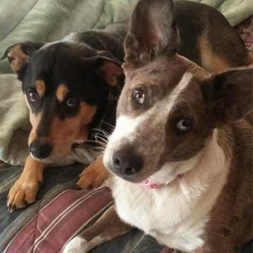 Gracie the Dog with Dog Friend