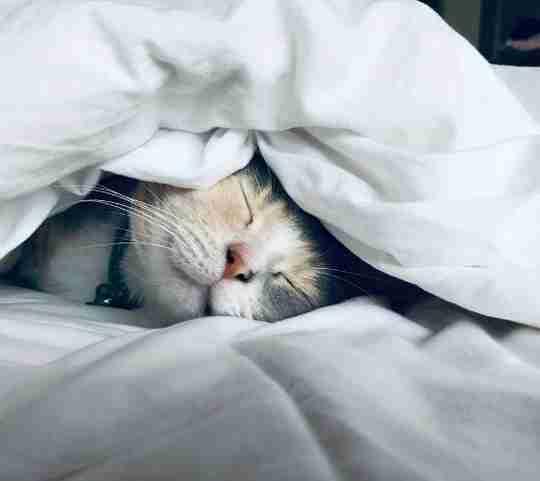 introducing cats - blog image