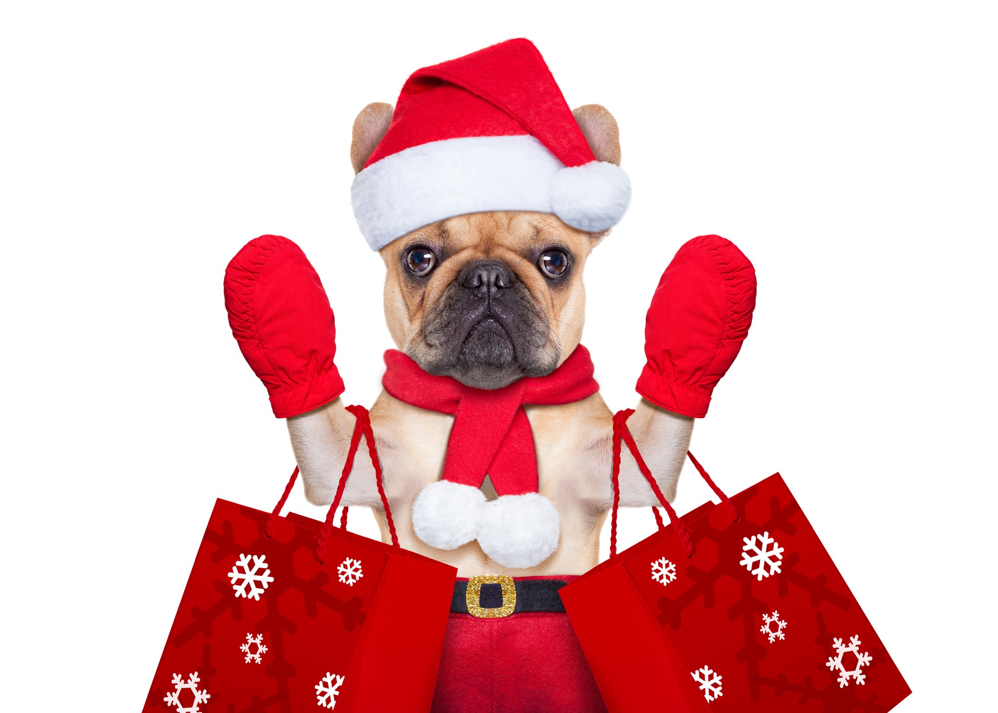 Pet & Pet Lover Holiday Gift Guide
