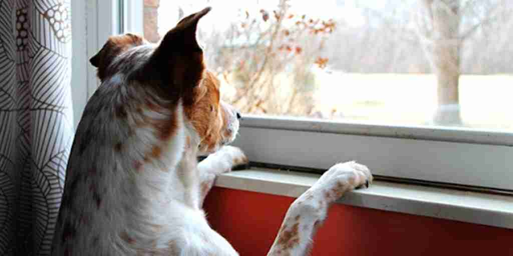 Curing Cabin Fever with Your Canine