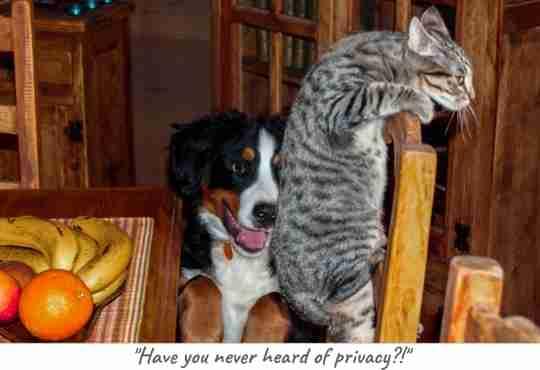 dog eats kitty litter from litter tray