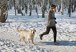 Dog jogging with owner in snow