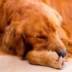 https://prana-pets.com/collections/cancer-symptoms