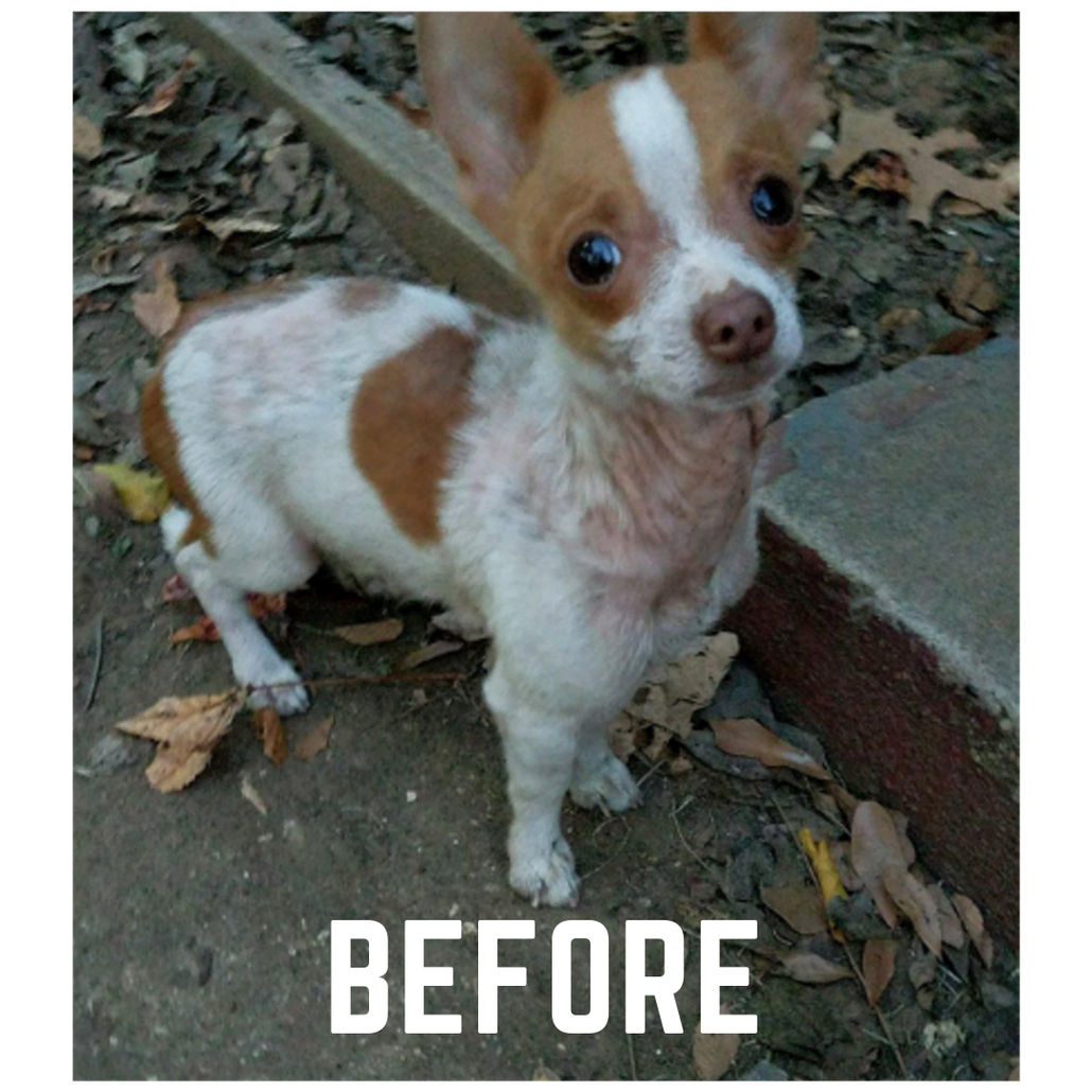 Before the Naturasil Pet Mange Treatment was applied.