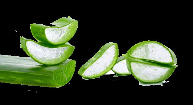 Feel the tender gel of Aloe Vera