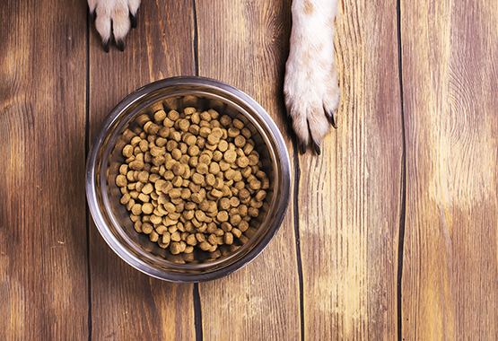 Your Dog's Microbiome: Why Gut Health is Important – WINPRO