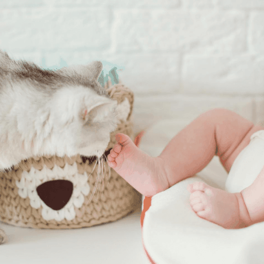 childproof pet products - article image