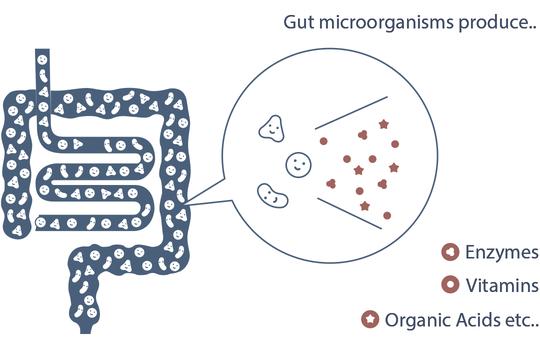 Pro EM-1 Gut Health Probiotics Lactobacillus Enzymes Vitamins Digestive Health