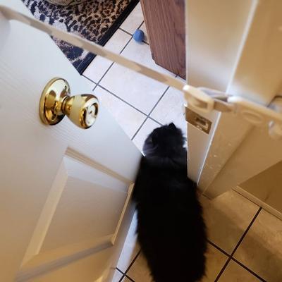 interior cat door alternative