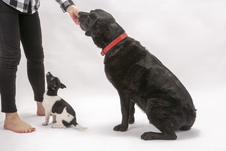How to Train Your Dog at Any Age