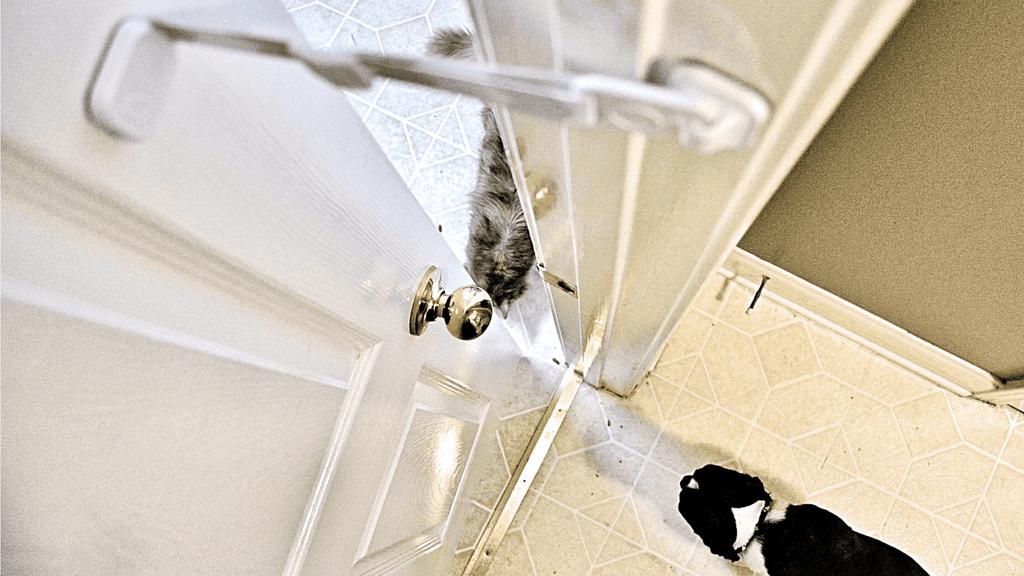 The Door Buddy Pet Proofing - Blog image